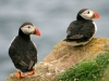 puffins-on-greater-saltee-island-2