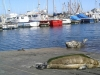 seals-on-slipway